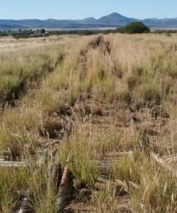 weeds on railway tack