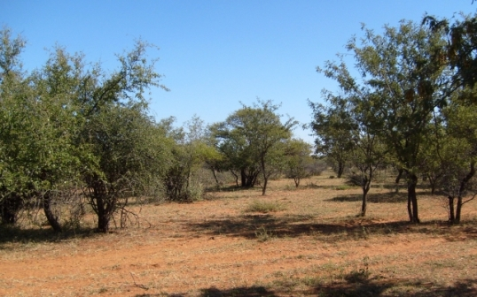 The kind of country the Green brothers would have traversed in their ox wagons to reach Lake Ngami from Bloemfontein