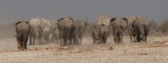 Black and white elephants