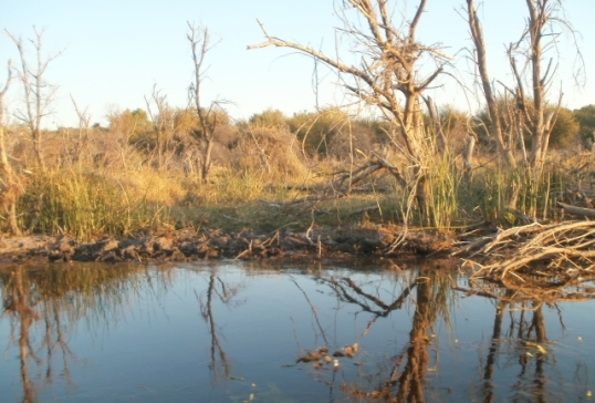 Dead trees along the river banks; they grew when the water level was lower