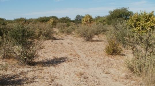 Kalahari bush and sandveld, about 160 km north-west of Kang