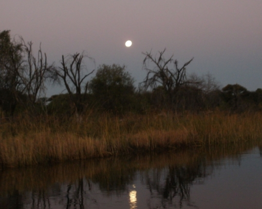 Moonrise in the Okavango Delta