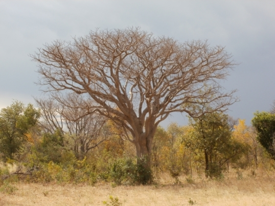 Roadside vegetation in northern Namibia. The variety is endless