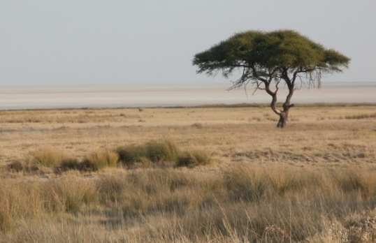 Etosha Pan looking north-west from Salvadora