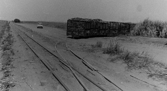Cane train in Zululand, December 1980