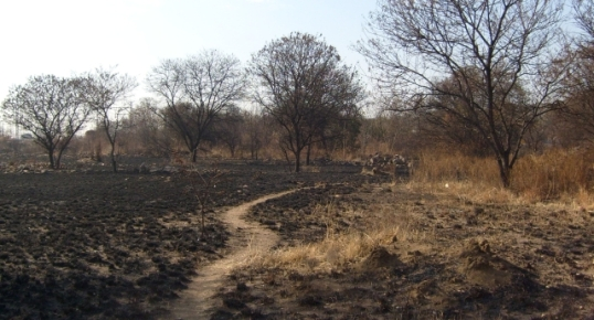 Burnt, dry and dead. With grass gone, the water flows