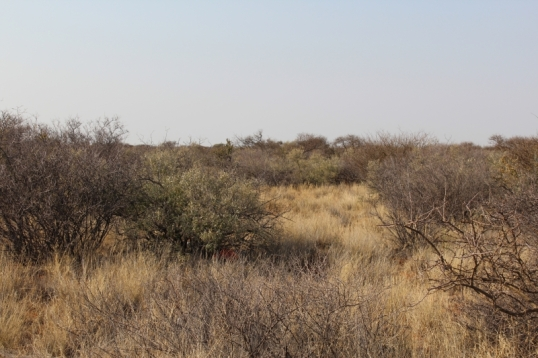 Non-red veld, away from the iron mines of Sishen