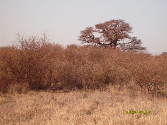 Even the grass and bushes look rusty round the iron mines at Sishen
